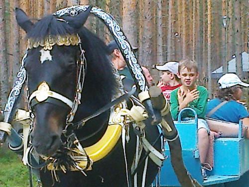 На лошадке по зоосаду